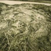Grasses I 60 x 80cm 2007
